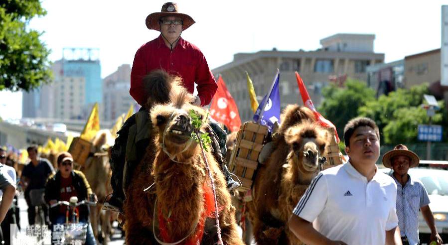 tea tour camel