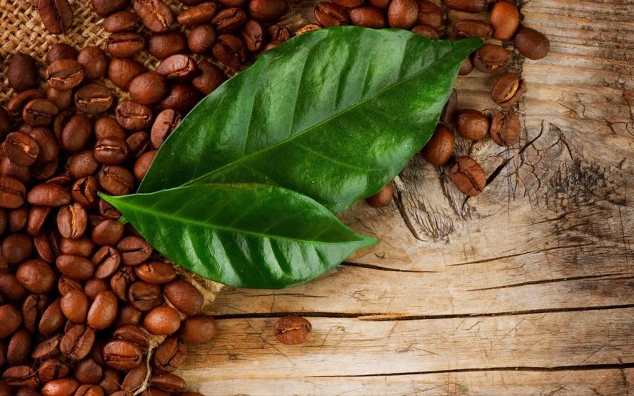 Coffee Leaf TeaGuide