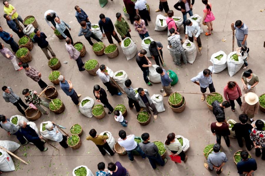 Brewing Success: Global Tea Sales Increasing in2015