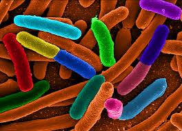 e-coli bacteria tea