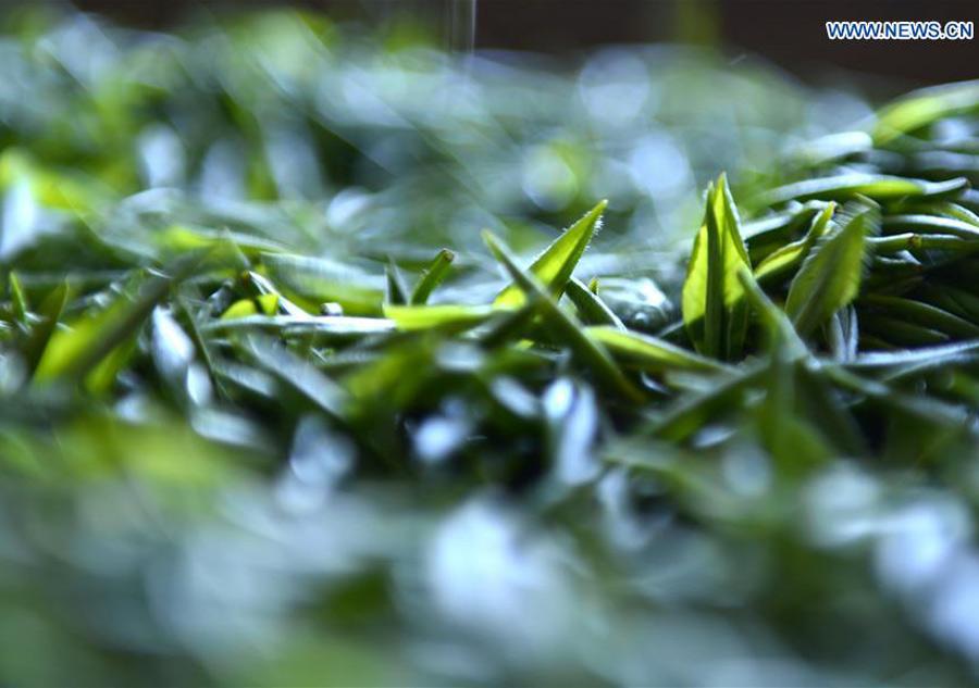 tea leaves close up